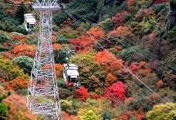 shodoshima04